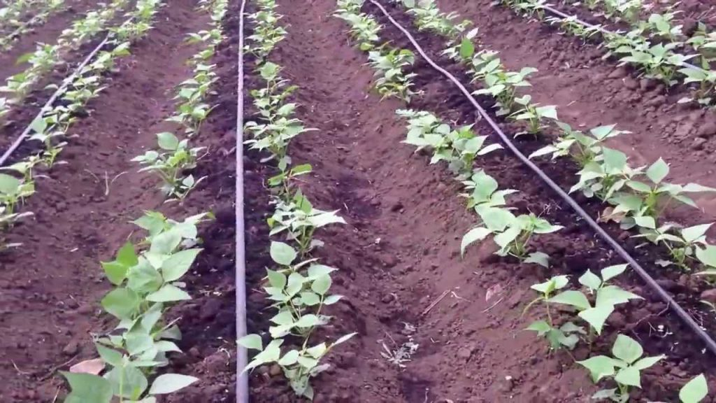 TOP 10 BLUNDERS IN DRIP IRRIGATION
