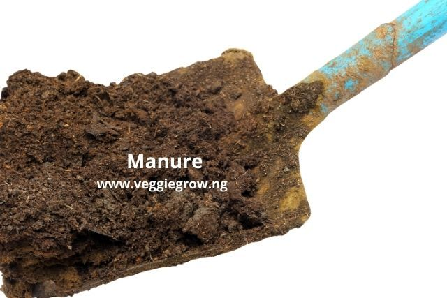 manure for cucumber cultivation