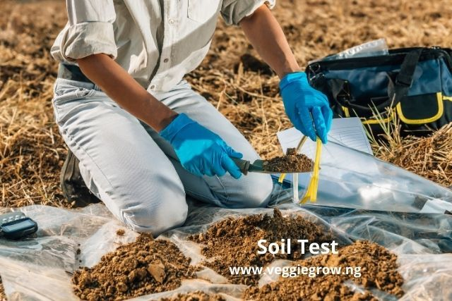 soil test for cucumber cultivation